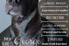 George Poster