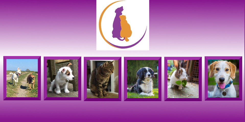 Small Dogs For Rehoming In Manchester Area
