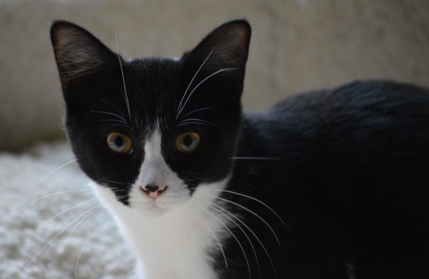 Oreo  ** Reserved **