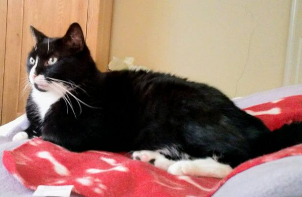Dill **Rehomed**