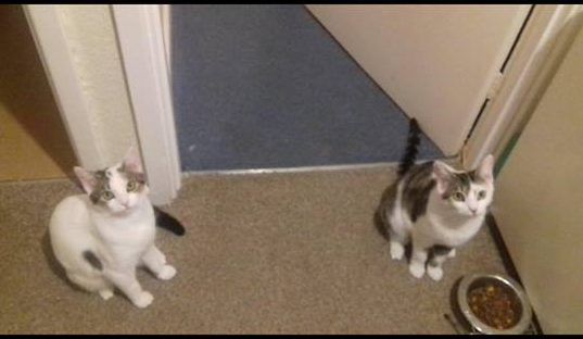 Salt and Pepper **Rehomed**