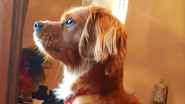 Charlie **REHOMED**