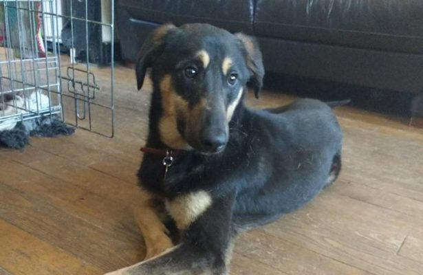 Marmite 6 mnth  Cross Breed *REHOMED *
