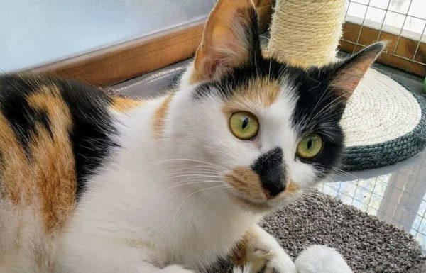 Florence  ** Rehomed **