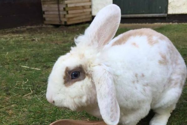 Jack – Rabbit **Rehomed**