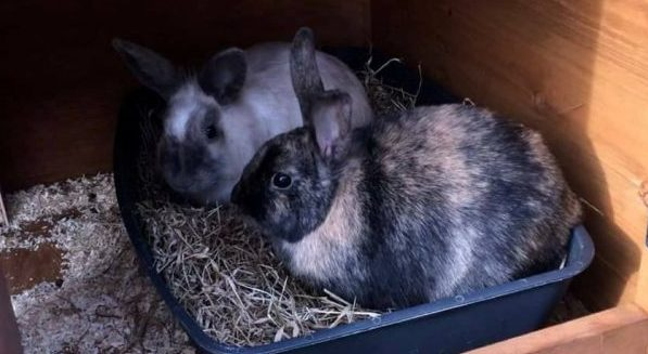 Oat and Millet Rabbits **Rehomed**