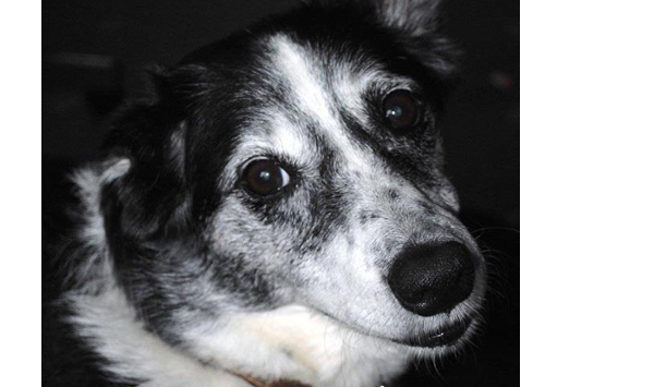 Abbie – **Rehomed**