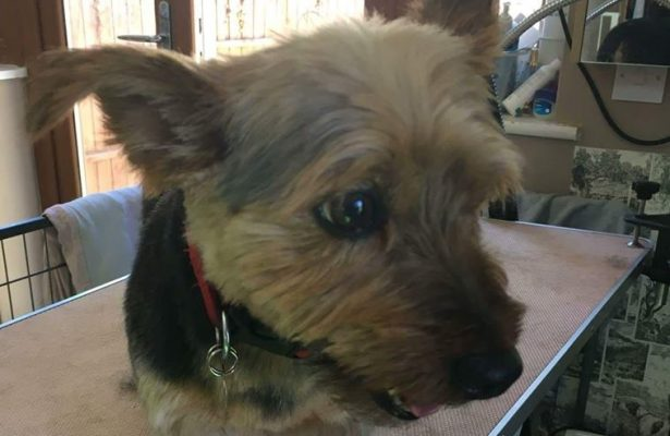 Scout **Rehomed**