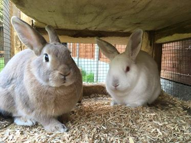 Toffee and Marshmallow Rabbits ** Rehomed **