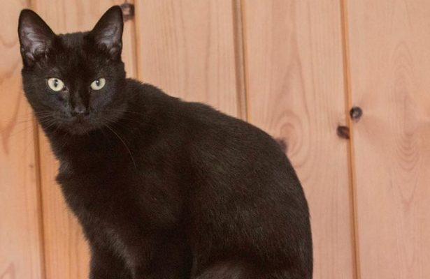 Thackery Binx. **Rehomed**