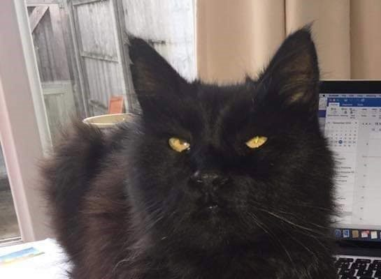 PEZ 14yrs Male **Rehomed**