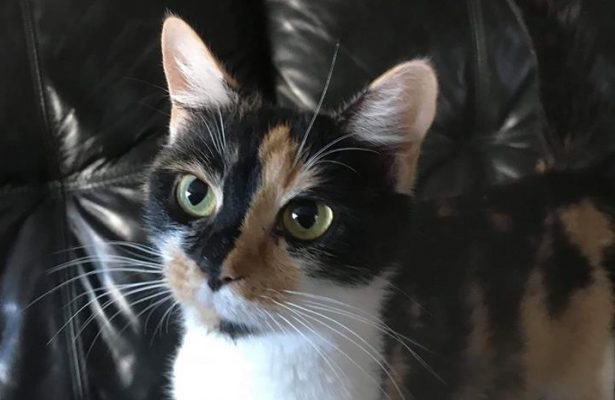 Toulouse **Rehomed**