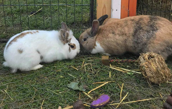 CALISTO & CHEWIT **Rehomed**