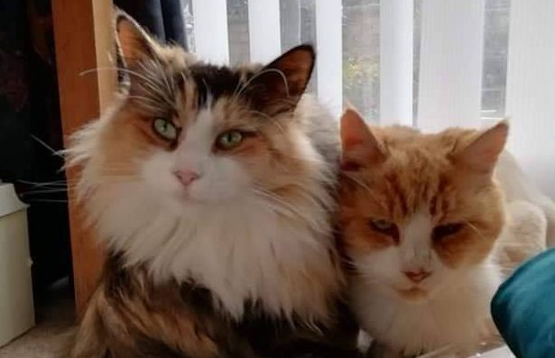 Parsnip & Cranberry **Rehomed**