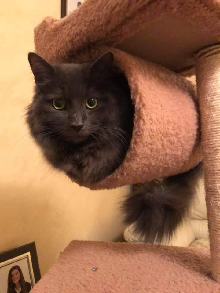 Maggie and Arthur Pair of female cats for adoption