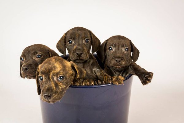 Puppies!! **Rehomed**