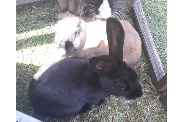 Astra and Sierra **Rehomed**
