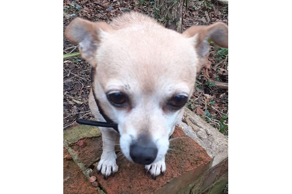 Cranberry **Rehomed**