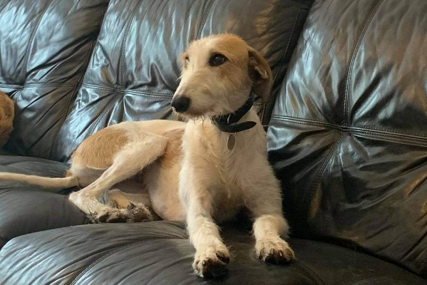 Relay **Rehomed**